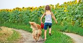 little girl walks on the leash with a golden retriever, go away