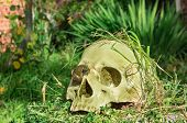 Old Human Skull In The Garden