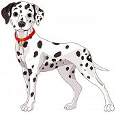 stock photo of spotted dog  - Illustration of a cute Dalmatian dog all attention - JPG