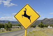 picture of caribou  - Driving safety  - JPG