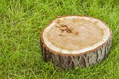 foto of disafforestation  - tree stump on the green grass - JPG