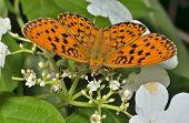 Butterfly (brentis)