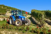 PIEDMONT, ITALY - OCTOBER 17, 2013: Tractor among vineyards during grape harvest season. Worldwide k