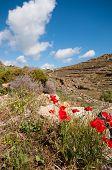 Landscape In Ano Mera, Mykonos
