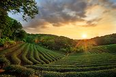 stock photo of malaysia  - tea plantation landscape sunset for adv or others purpose use - JPG