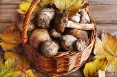 Wild mushrooms and autumn leaves in basket close-up