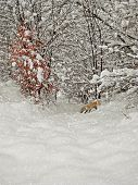 aging winter photography with wildlife scenery