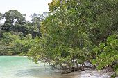 Tropical Plants And Trees On The Islands