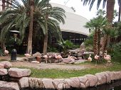 Flamingos At The Flamingo Hotel In Las Vegas