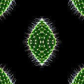 Pattern Of Closeup Green Cactus Isolated On The Black