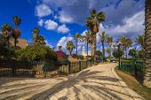 A Beautiful Promenade With Palm Alley. Jaffa, Tel Aviv. Israel.