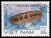 Sea Holothuria Monacaria