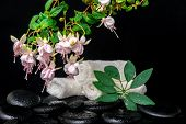 Spa Setting Of Branch Pink Fuchsia Flower, Towels, Leaf Shefler And Zen Basalt Stones With Dew, `fra