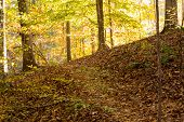 Steep Hiking Trail In Fall