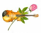 image of violin  - The violin and rose isolated on white background illustration paper texture - JPG