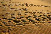 stock photo of footprints sand  - Sun soaked golden fine silky smooth sand with footprints at Sam Sand Dunes Jaisalmer Rajasthan India Asia - JPG