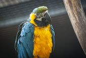 pic of zoo  - Colorful macaw parrot in Ljubljana ZOO - JPG