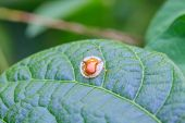 stock photo of leaf insect  - Insect on leaf beautiful wildlife in nature - JPG