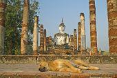 Dog And Buddha At Ruins In Sukhothai,Thailand