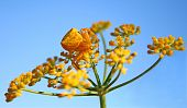foto of goldenrod  - With shallow DOF - JPG