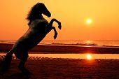 Rearing Horse At Sunset