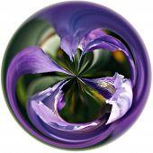 Iris In A Bubble 2