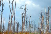 stock photo of katrina  - Katrina hurricane destruction still visible two years later - JPG