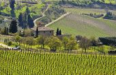 stock photo of farmworker  - An old house surrounded by vineyard in Tuscany - JPG