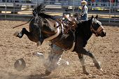 APACHE JUNCTION, AZ - FEBRUARY 28: A competitor is thrown from a bucking horse in the saddle bronc c