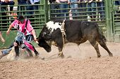 APACHE JUNCTION, AZ - FEBRUARY 26: A bull fighter distracts a bull during the bull riding competition at the Lost Dutchman Days Rodeo on February 26, 2010 in Apache Junction, Arizona.