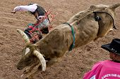APACHE JUNCTION, AZ - FEBRUARY 26: A cowboy falls off  a bucking bull in the bull riding competition