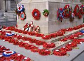 Poppies at cenotaph london.