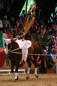 KAPOSVAR, HUNGARY - AUGUST 12: Dimitri Suhner (SUI) in action at the Vaulting World Championship Fin