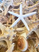 Cluster Of Sea Life Snail Shell, Thin Starfish With Large Starfish In The Backgeound poster