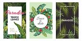 Tropical Leaves Posters. Jungle Plants Summer Flyers, Banana Palm Leaf Pattern, Foliage Design. Vect poster
