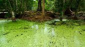 swamp in jungle