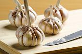 garlic cluster