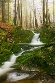 foto of fall trees  - View of beautiful waterfall during the daytime - JPG