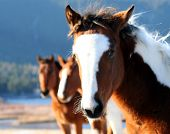 stock photo of beautiful horses  - wild horses - JPG