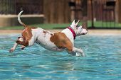 Dog Refreshing In A Swimming Pool, Active Games With Family Pets And Popular Dog Breeds Like A Compa poster