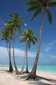 White Sand Paradise Beach