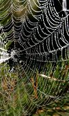 Spider-web After Rain
