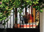 Ornate Iron Gates With Patio