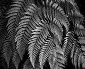 Leaf Fine Art