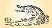 Río Predator - Pike