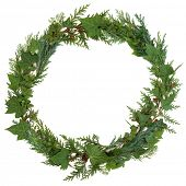 Winter wreath of ivy, holly and cedar cypress leaf wreath over white background.