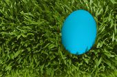 A Detailed Close Up Of A White Egg, Nestled In The Green Grass With Clipping Path