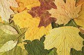 Yellow Leaves. Closeup