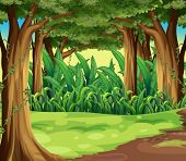pic of greenery  - Illustration of the giant trees in the forest - JPG