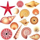 stock photo of scallop shell  - popular and colorful seashells isolated on white vector set - JPG